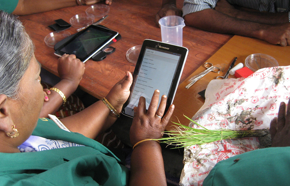 An Indian plant doctor using a tablet