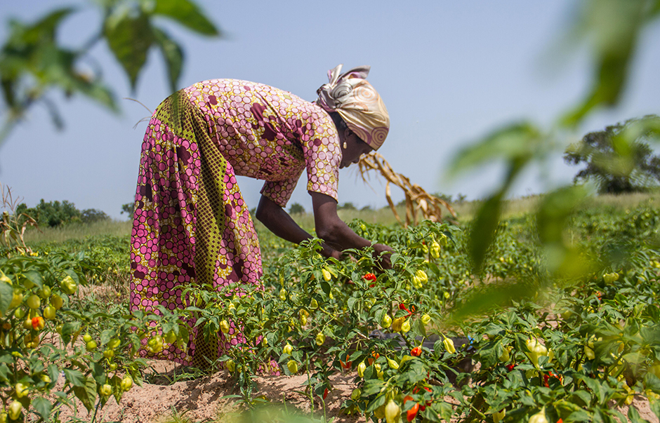 A female African farmer bent over in a field